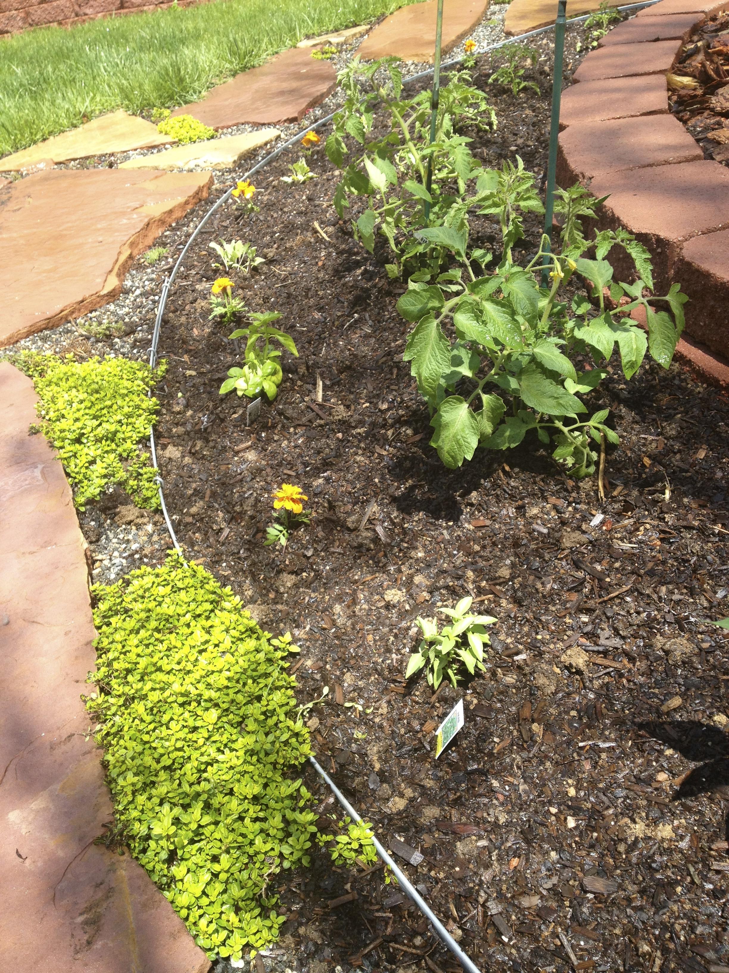 last year\'s lavender | DIY lavender bath salt soak | holly & flora