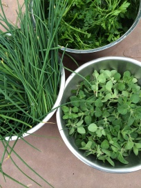 Freshly clipped herbs: parsley, chives, oregano.