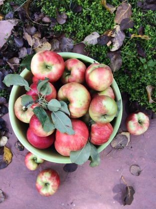 bowl of apples from our tree