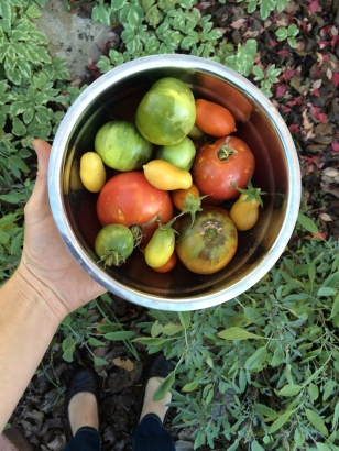 hand holding bowl of fall tomatoes