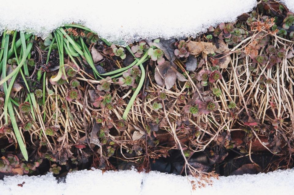 melting snow | holly & flora