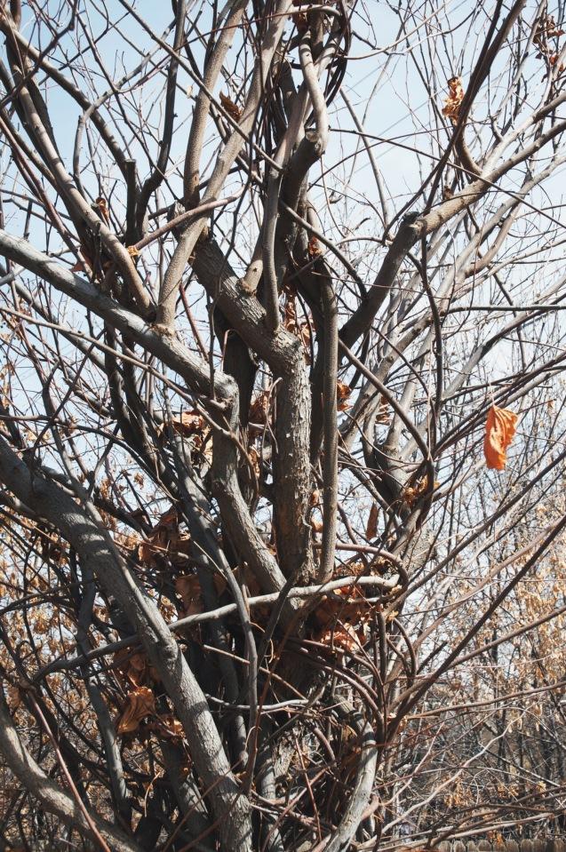 the tornado tree | holly & flora