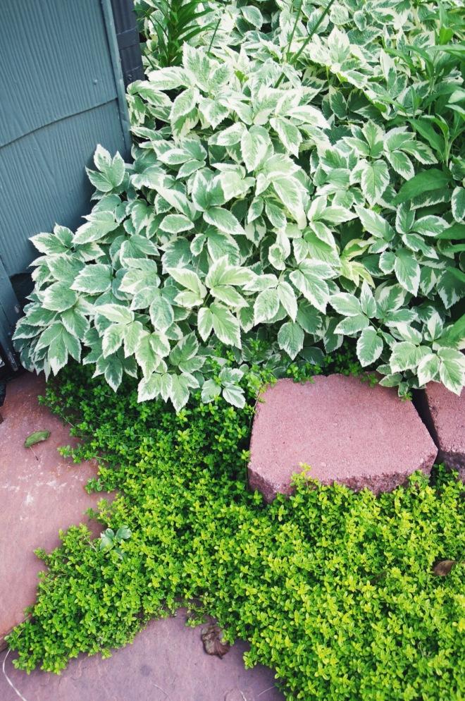 spring garden | holly & flora