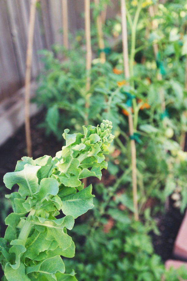 summer dill + snap pea shim | how to grow dill | holly & flora
