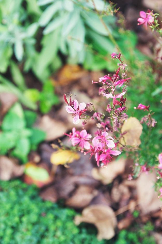 vml gardens + their 2014 gewurtraminer | holly & flora