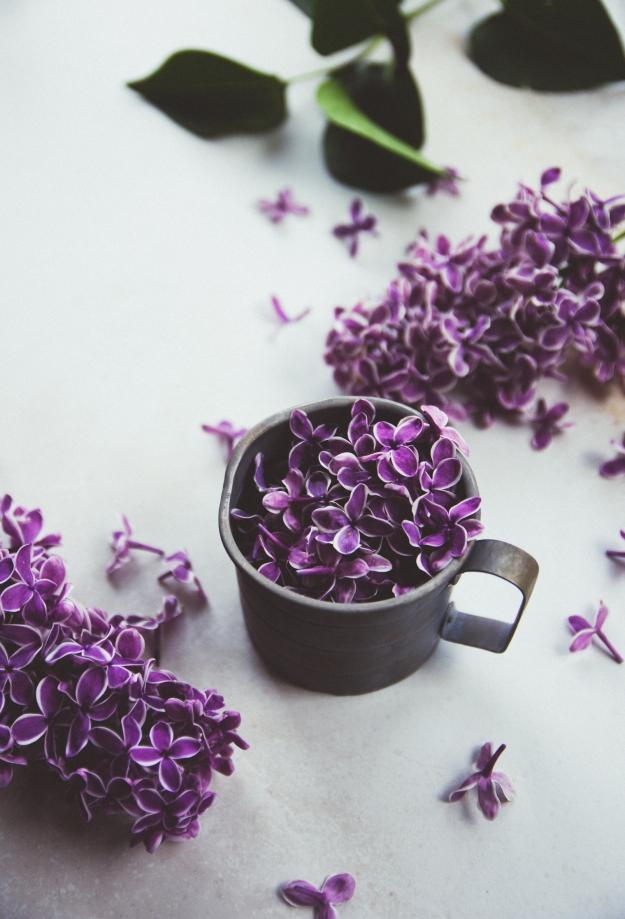 lilac 75 cocktails + lilac syrup | eat boutique