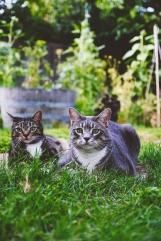 Kazu cat and Grey girl.