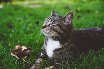 Kazu cat, soaking in the greenery.